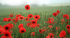 Ross RBL Annual Poppy Concert at John Kyrle High School