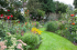 60 Bury Lane - Open Garden for NGS