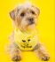 Fun for kids at Dogs Trust