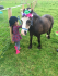 Decorating ponies at Paddock Pony Parties