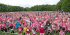 Race for Life Southport
