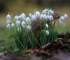 Snowdrop Weekends