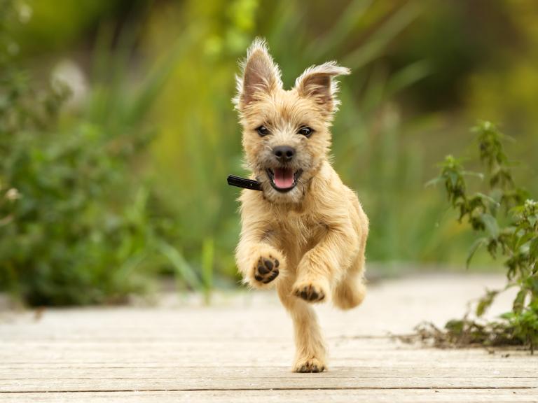 Adopt A Rescue Dog In Brighton And Hove