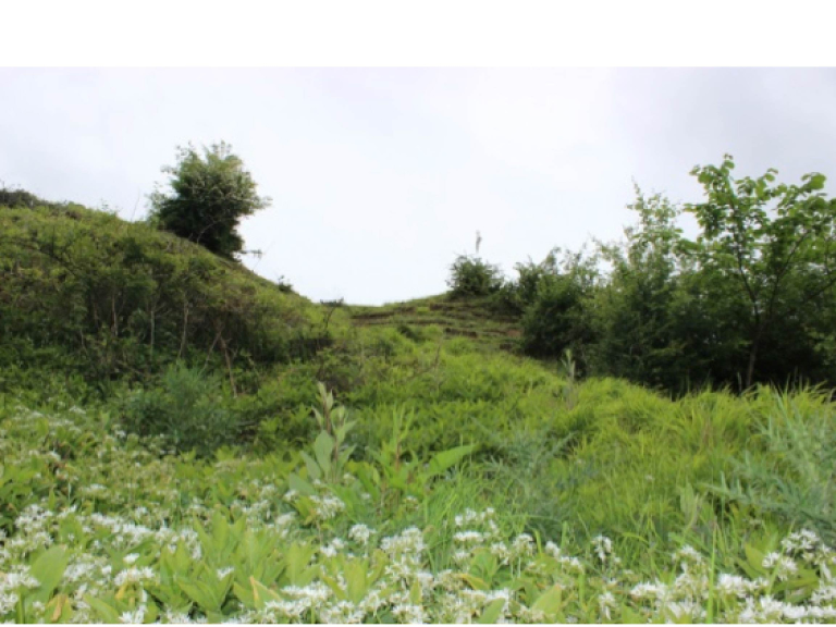 Summer walk will uncover hillfort's healing powers