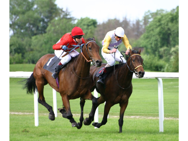 What Role Does a Trainer Play in Preparing a Racehorse for Competitions?