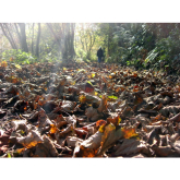 Kickin' up the Autumn Leaves – looking for fungi, feeling groovy!