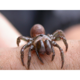 The British Tarantula - Sussex Wildlife Trust