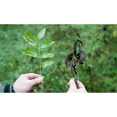 Ash dieback is now a fact of life  - Sussex Wildlife Trust