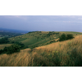 Ditchling Beacon - Five Fascinating Facts - Sussex Wildlife Trust