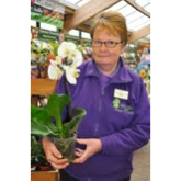 Free orchid experts ahead  of Mothering Sunday
