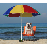 Twelve top tips for keeping your pets safe in the sunshine!