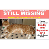 Have you seen Frankie – cat missing in Ewell @animalsearchuk @epsomewellbeat