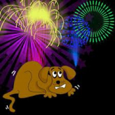 How can I protect my pet during firework season?