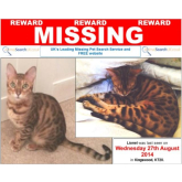 Lost Cat in Kingswood – can you help? #lostcat