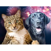 Looking After Your Pets on Guy Fawkes Night!