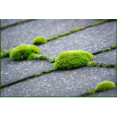 Cleaning Moss Of Garden Paths With The Help Of Power Washing North West