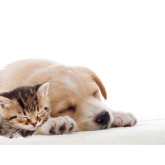 Top Quality Animal Care in Lichfield
