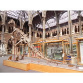 Top 5 Oxford Museums