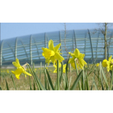 St David's Day 2015 events