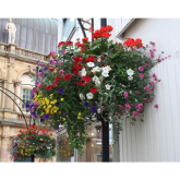 Blooming Lovely Help for Harrogate Town Centre Businesses