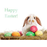 Whats On In Solihull This Easter Weekend
