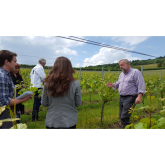 England's first local wine tours in the Surrey Hills