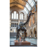 Dippy the Diplodicus is coming to Wales