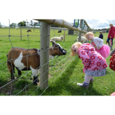 Hatfield Park Farm re-opens for the 2018 season