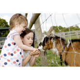 Get a fantastic value season ticket for Hatfield Park Farm