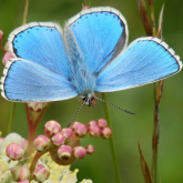 Brilliant Butterflies - find them in your Sussex backyard!