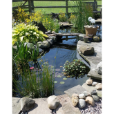 Ponds and water features bring life into any garden, literally!