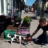 Dog-friendly Brighton and Hove