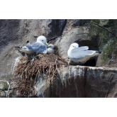 Beautiful breeding success for Living Coasts
