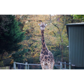 Giraffe death shocks zoo