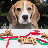 A Recipe For A Pawfect Christmas