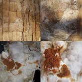 The Signs of Dry Rot