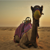 Make Your Dubai Desert Safari Memorable With These Fun Activities