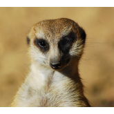 Become the meerkat of your business