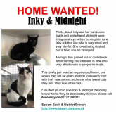 Meet Inky and Midnight looking for a home - #Epsom & Ewell Cats Protection @Epsom_CP #giveacatahome