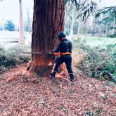 Why You Need a Tree Surgeon