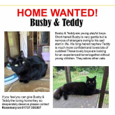 Meet Busby and Teddy looking for a home - #Epsom & Ewell Cats Protection @Epsom_CP #giveacatahome
