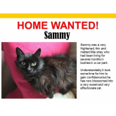 Meet Sammy looking for a home - #Epsom & Ewell Cats Protection @Epsom_CP #giveacatahome