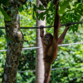 INTO THE WILD: 5 THINGS YOU MUST DO WHEN VISITING BORNEO