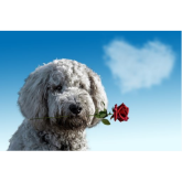 9 Ways to show your dog you love them on Valentine's Day