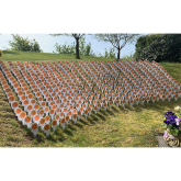 Remember your loved ones with a flower tribute in a St Giles Hospice garden