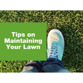 TIPS ON MAINTAINING YOUR LAWN