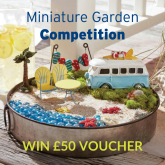 Miniature Garden Competition for Kids