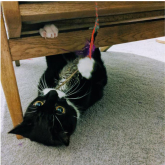 Meet Romeo - A success story for Epsom and Ewell Cats Protection @Epsom_CP #GiveACatAHome