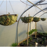 Making the Most Out of the Space in Your Polytunnel