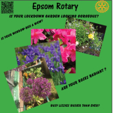 The Beautiful Gardens Of #Epsom And #Ewell - #PhotoCompetition with @EpsomRotary